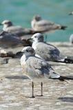 Grupp av seagulls vid vattnet Royaltyfri Foto