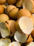 Grupp av Shell ägg Bakgrund för äggskal royaltyfri bild