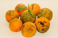 Grupp av sidan för Rangpur limefrukt - förbi - sida Royaltyfri Foto