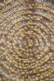 Grupp av silkesmasken i gul kokongetapp Fotografering för Bildbyråer