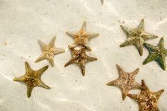 Grupp av sjöstjärnan som är undervattens- på sandig havbotten Royaltyfria Foton