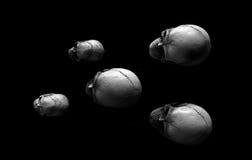 Grupp av skallar Arkivfoto