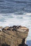Grupp av skyddsremsor som vilar på en klippa Arkivbild
