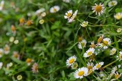 Grupp av små vita blommor Arkivbild