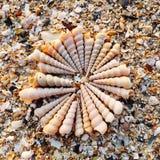 Grupp av snäckskal på stranden royaltyfri fotografi