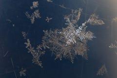 Grupp av snöflingadetaljen royaltyfria foton