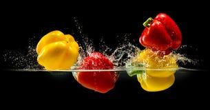 Grupp av spansk peppar som faller i vatten med färgstänk på svart bakgrund Royaltyfri Bild