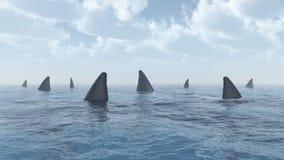 Grupp av stora vita hajar Fotografering för Bildbyråer