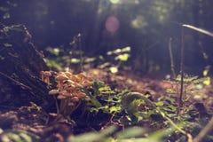 Grupp av svampen i skogen, tappning Royaltyfri Foto