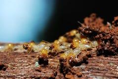 Grupp av termites Royaltyfri Bild
