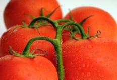 Grupp av tomater Fotografering för Bildbyråer