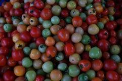 Grupp av tomater Royaltyfri Fotografi