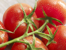 Grupp av tomater med droppar på den Arkivfoto