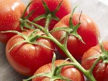 Grupp av tomater med droppar på den Royaltyfri Bild