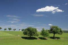 Grupp av träd Royaltyfri Bild