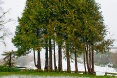 Grupp av träd i snöstorm royaltyfria bilder