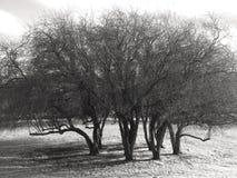 Grupp av träd på en kulle med inga sidor Royaltyfri Foto