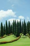 Grupp av trädet i parkera Arkivbild
