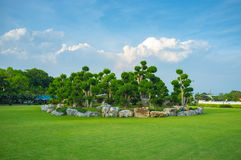 Grupp av trees arkivfoton