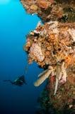 Grupp av tropisk korall med det barnsliga fotografiet för Salvadordelikatessaffär Royaltyfria Bilder