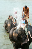 Bada med elefanter Royaltyfri Fotografi