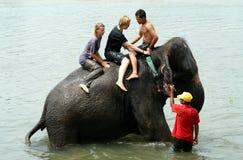 Bada med elefanter Arkivbild