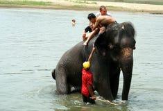 Bada med elefanter Arkivfoto