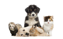 Grupp av unga husdjur royaltyfri fotografi