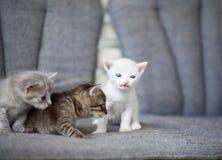 Grupp av unga katter arkivfoton