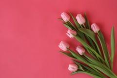 Grupp av vårtulpan i blom royaltyfria bilder