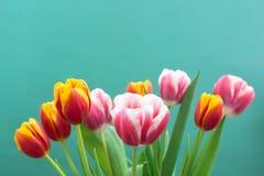 Grupp av v?ren Tulip Flower fotografering för bildbyråer