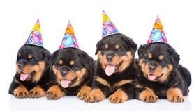 Grupp av valpar Rottweiler med födelsedaghattar Isolerat på vit Royaltyfri Fotografi