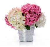 Grupp av vanliga hortensian Royaltyfria Bilder