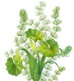 Grupp av vatten- växter Royaltyfria Foton