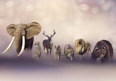 Grupp av vilda djur royaltyfri fotografi