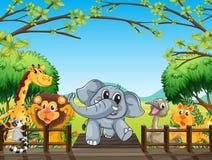 Grupp av vilda djur på bron i skogen Royaltyfri Foto