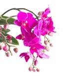Grupp av violetta orkidér Arkivfoto