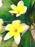 Grupp av vit- och gulingblommor Royaltyfri Foto