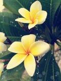 Grupp av vit- och gulingblommor Arkivfoto