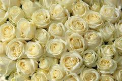 Grupp av vita rosor i blom- bröllopgarneringar royaltyfri fotografi