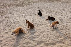Grupp av vovvar på stranden royaltyfri bild