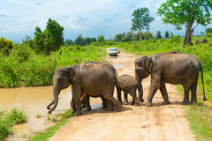 Grupp av wild elefanter Royaltyfri Fotografi
