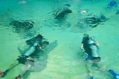 Grupp f?r dykapparatdykning i p?l Ban's som dyker mitten semesterort-CDC arkivfoto