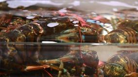 grupp 4K av levande hummer i en behållare inom en restaurang lager videofilmer