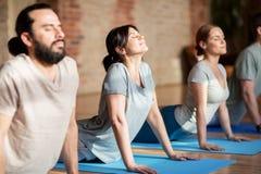 Grupp människor som gör yogahunden, poserar på studion royaltyfria bilder