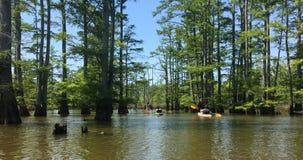 Grupp människor som Kayaking till och med den Cypern skogen på gömställefloden Ca royaltyfria foton