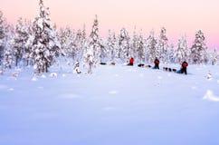Grupp människorhund som Sledding till och med en skog arkivbilder