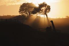 Grupp på solnedgången Arkivbild
