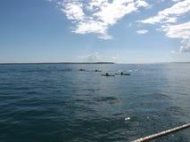 Grupp som Kayaking Arkivbilder