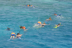 grupp som snorkeling Royaltyfri Bild